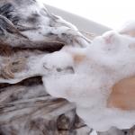 産後の抜毛をしている時期のシャンプーについて